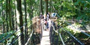 Kletterwald + Baumkronenpfad + Minigolf + Sommerrodelbahn uvm. Hoherodskopf - Foto 1