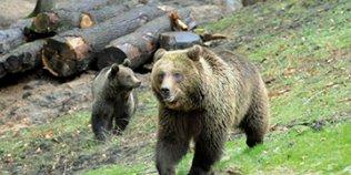 Wildpark Schwarze Berge - Foto 2