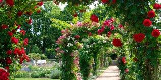Ostdeutscher Rosengarten Forst (Lausitz) - Foto 2