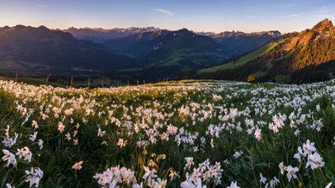 Westschweiz - Foto 1