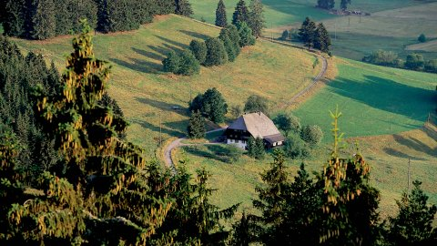 südlicher Schwarzwald - Foto 2