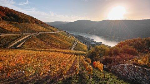 Rheingau - Foto 1