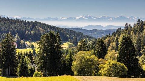 Hotzenwald - Foto 1
