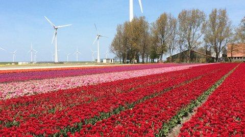 Flevoland - Foto 1