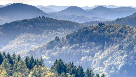 Pfälzer Wald - Foto 1